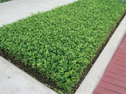 Landscaping Plant Selections | Earthworks