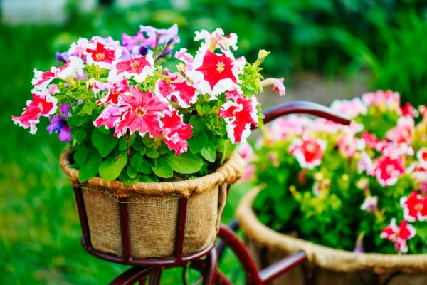 4 Ways to Get the Most out of Colorful Summer Landscapes