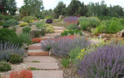 Save Money and Increase Your Property's Value with Xeriscaping