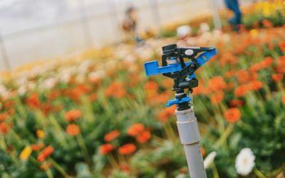 Navigating Summertime Irrigation Challenges