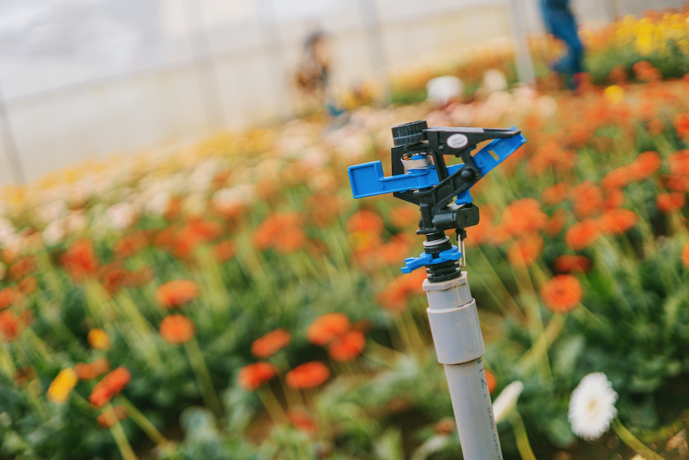 Navigating Summertime Irrigation Challenges