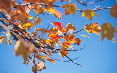 It's Raining Leaves: A Guide To Understanding Seasonal Leaf Drop