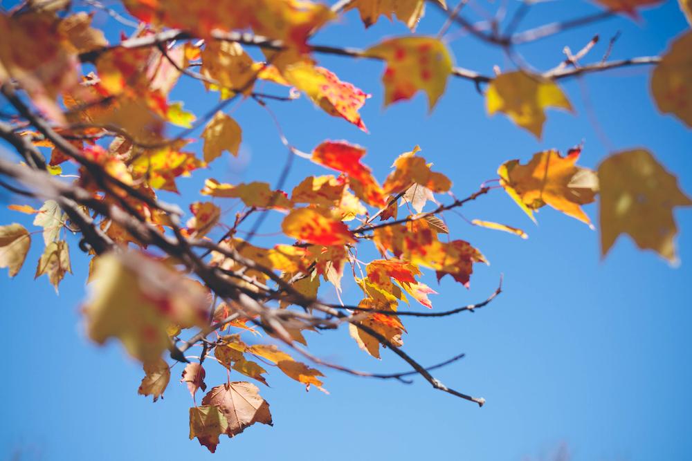 It's Raining Leaves: A Guide To Understanding Seasonal Leaf Drop