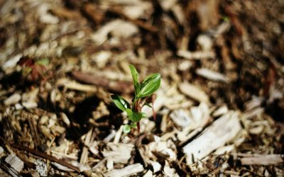 Mulching: What You Need to Know