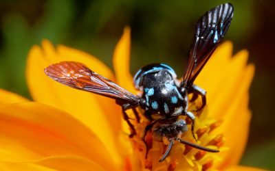 All About Landscaping Pests