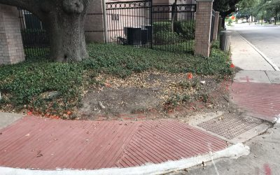 How to Protect Your Landscaping Against Erosion