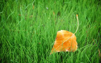 Four Essential Ways to Adjust Your Commercial Landscaping for Fall