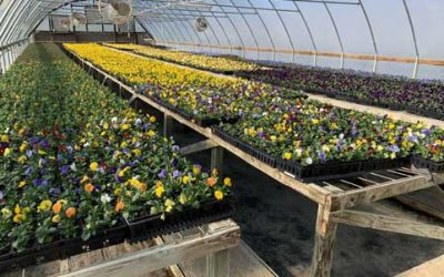 EarthWorks Brightens Up Texas Landscapes with Seasonal Color