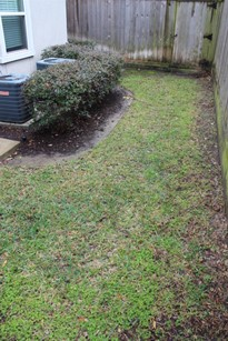 A side shot of a private backyard with new sod and fencing.