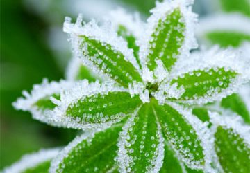 The Big Chill: What You Should Know About Winterizing Your Landscape for Cold Weather