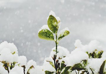 Why a Cold Winter Can Benefit Your Plants