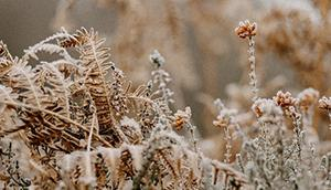 Should Your Landscaping Be Replaced? A Closer Look at the Effects of the Winter Freeze
