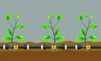 Drip Irrigation: The Good, The Bad, and The Aesthetically Pleasing