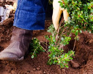 Landscaping Delays Got You Down? Here's What You Need to Know