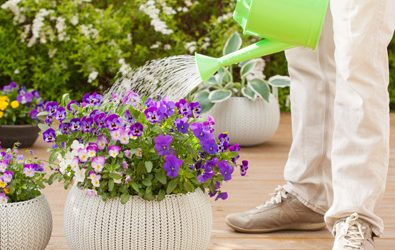 5 Ways to Protect Your Plants from Heat Stress This Summer