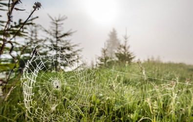 What You Need to Know About Spider Mites and Evergreens